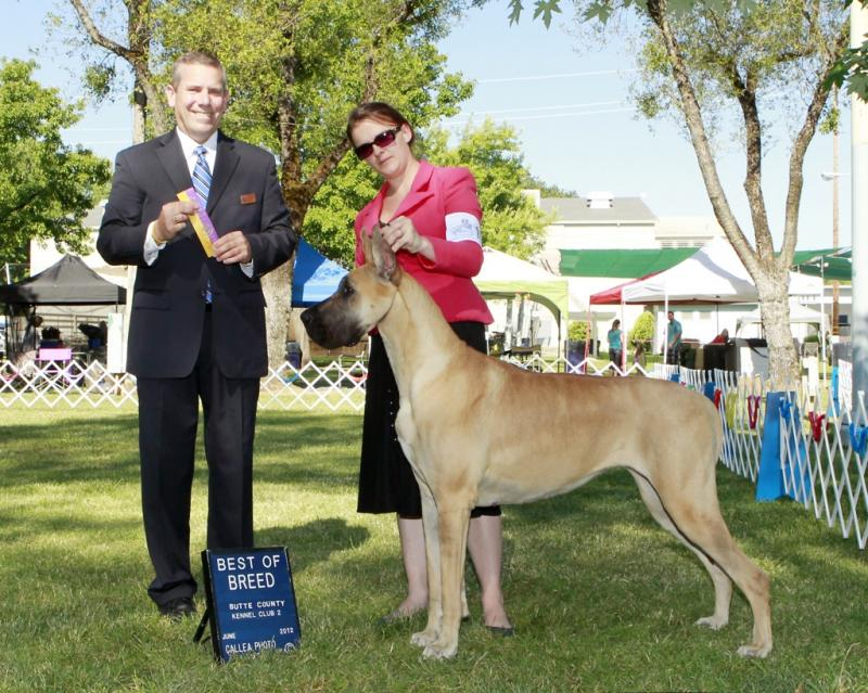 GCH Kiss - Best of Breed