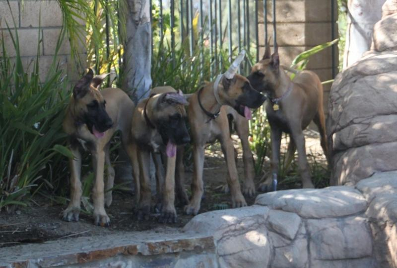 Pups 3 months old-July 28